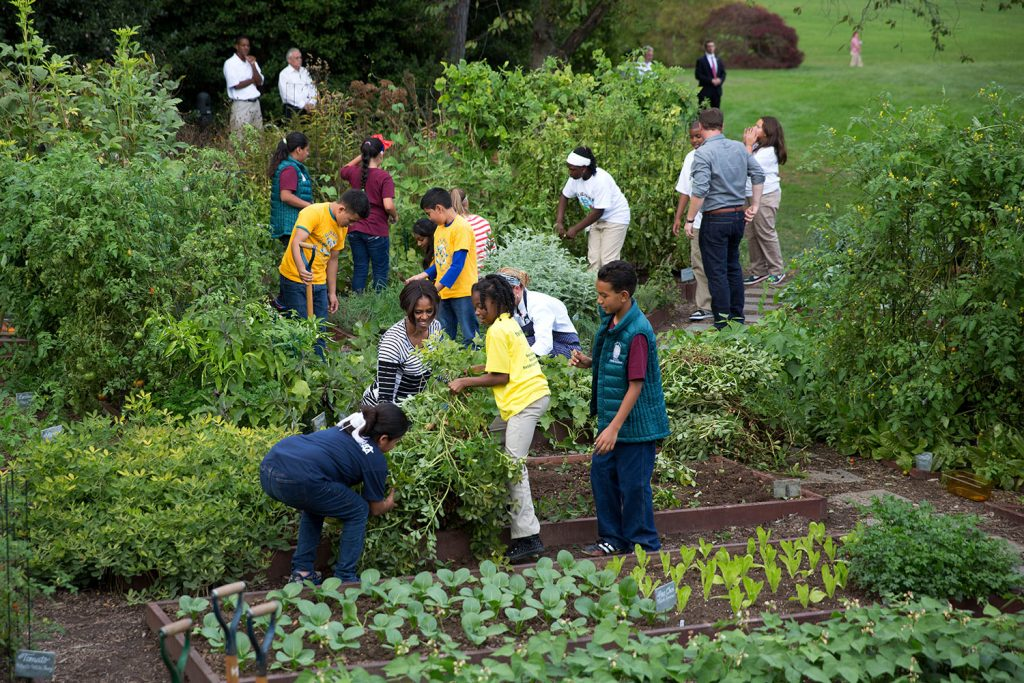 Mrs. Obama joins school children and chefs for the annual fall harvest of the White House Kitchen Garden