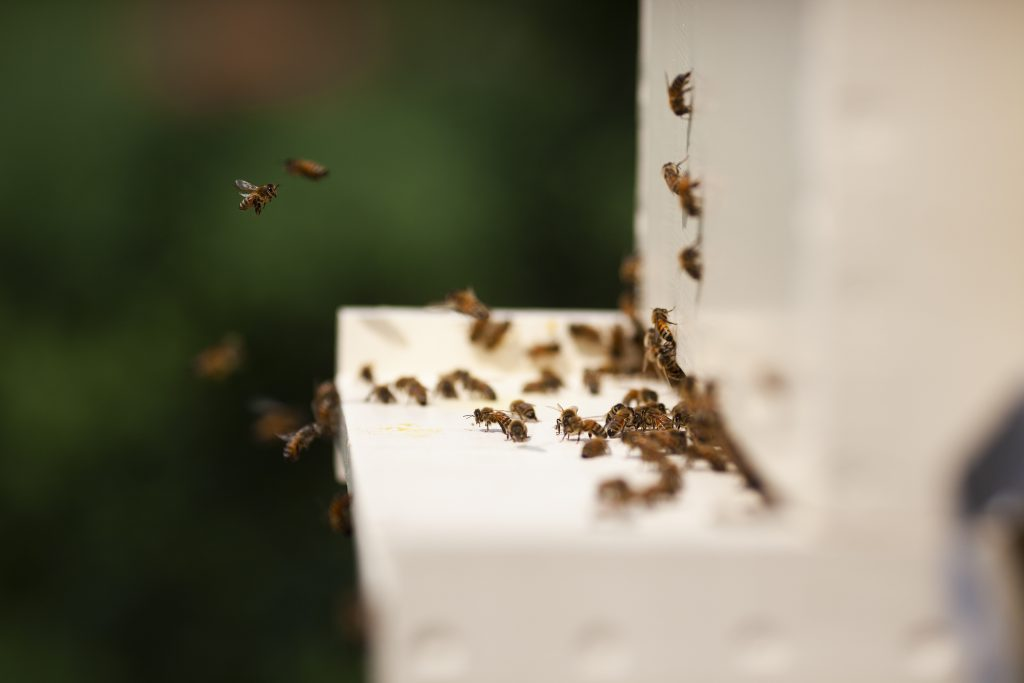 Bees gather around a hive.