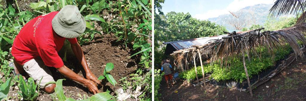 Two photos are shown of a man planting a tree along with a covered tent filled with baby trees.